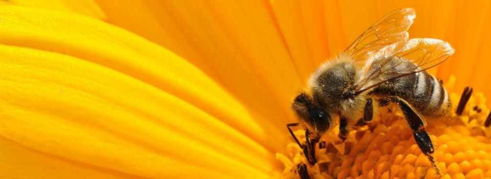 Včelařství JR