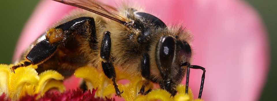 Unhošťský med